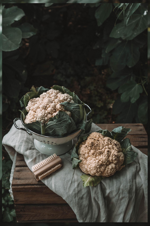 bloemkool oogsten