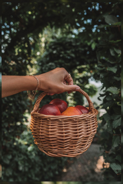 Fruit oogst Linda's Wholesome Garden