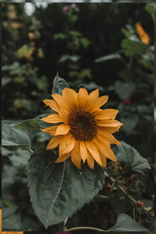 Dit kun je in september in de tuin doen | zonnebloem